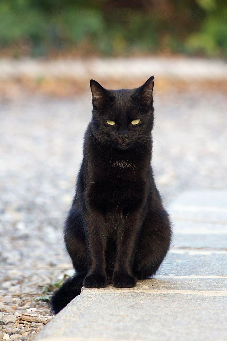 она картинки про черных кошек здесь