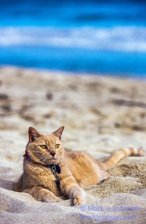 Cat relaxing at the beach.  (KO) Gettin' some rays. Working on his tan. Beautiful boy!
