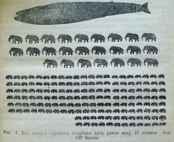 Инфографика — вес одного крупного голубого кита, 1948 год, СССР кит, инфографика