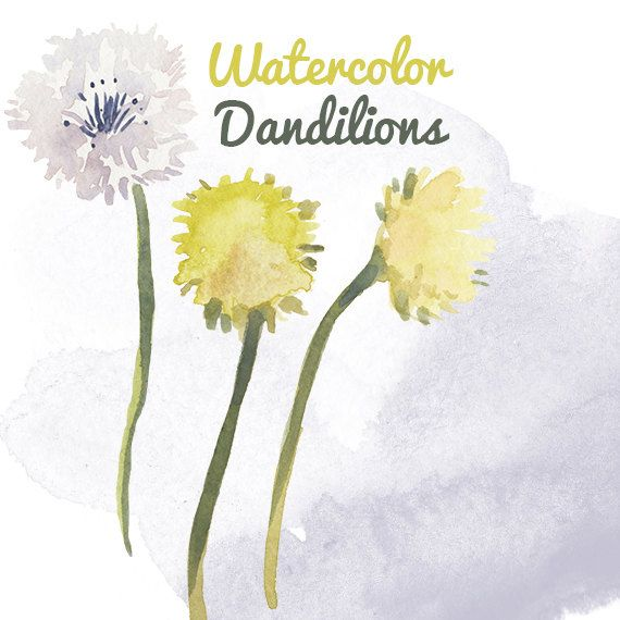 Watercolor Dandelion Weed Flower Clip Art for Scrapbooking Instant Download Digital Flowers Digital Clipart Commercial Use