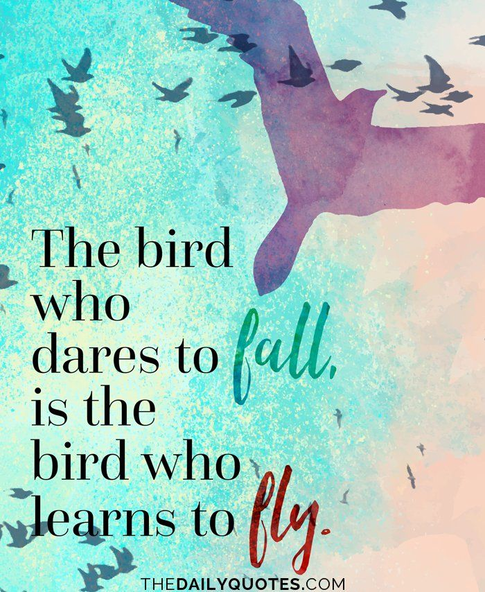 The bird who dares to fall, is the bird who learns to fly.  thedailyquotes.com