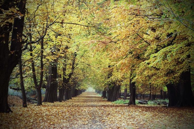 Autumn forrest, Dyrehaven by Tina Bardenfleth