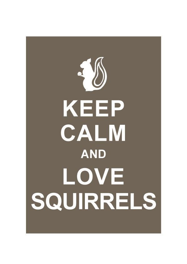 Keep Calm and Love Squirrels : Cappuccino - Wedding Birthday Anniversary Gift Children Decor Kids Room Home Decor - BUY 2 Get 1 Free. $10.80, via Etsy.