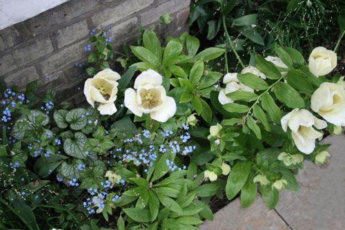 London Front Garden by garden designer Joanna Archer