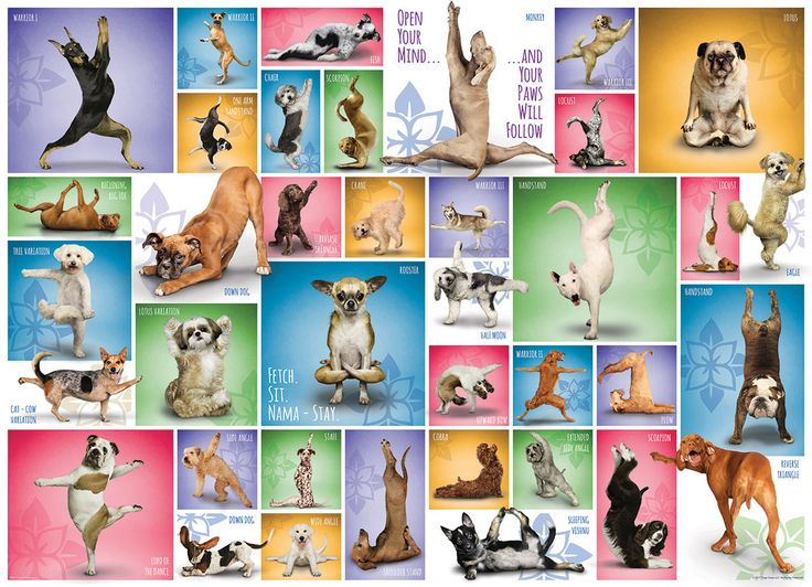Yoga Dogs. Discover some of the basic yoga positions with the help of your furry friends.  1000 pieces.