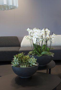 Det finnes mange planter som er enkle å stelle som f.eks svigermors tunger, sukkulenter og orkidéer.