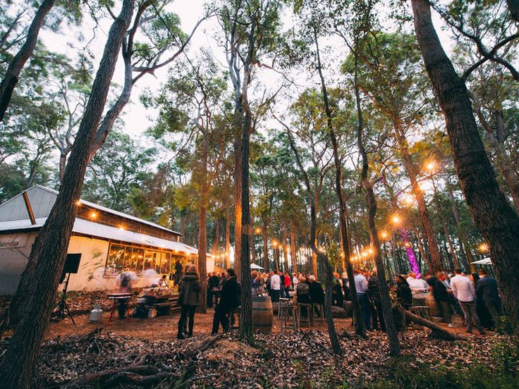 The forrest of Leeuwin Estate, Margaret River Gourmet Escape 2014 presented by Siemens