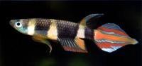 51 best aquarium images on pinterest fish aquariums for Garra rufa fish petsmart