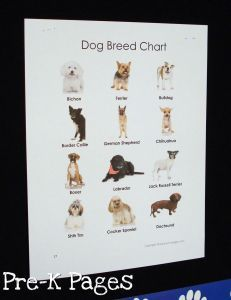 Dog breed chart to go with dramatic play Vet's Office via http://www.pre-kpages.com/dramatic-play-vets-office/