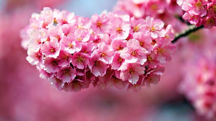 pink flowers desktop wallpaper