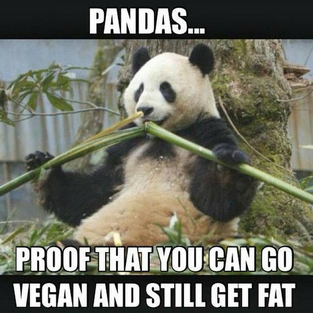Funny Vegan Memes : Best vegan funny memes images on pinterest