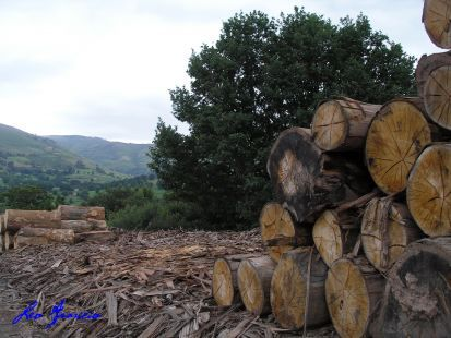 Deforestación en Argentina