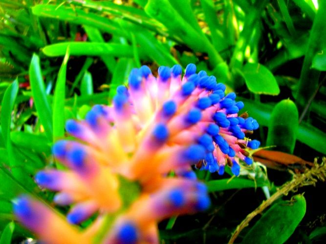 Exotic Plant Inspiration For Freeform Crochet Pinterest