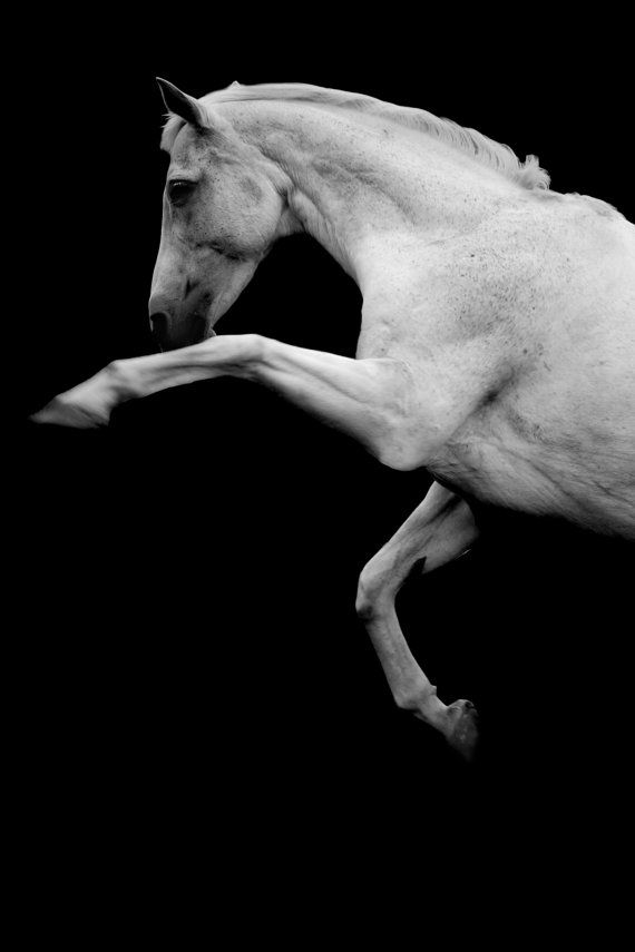 Rearing horse photo, black and white, fine art photo, rearing stallion, horse print, 'the horse', LARGE PRINT