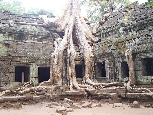 Google Image Result for http://www.asiatoptravel.com/images/Cambodia/Angkor-Wat-Cambodia-ta-prohm-red-betty-black.jpg