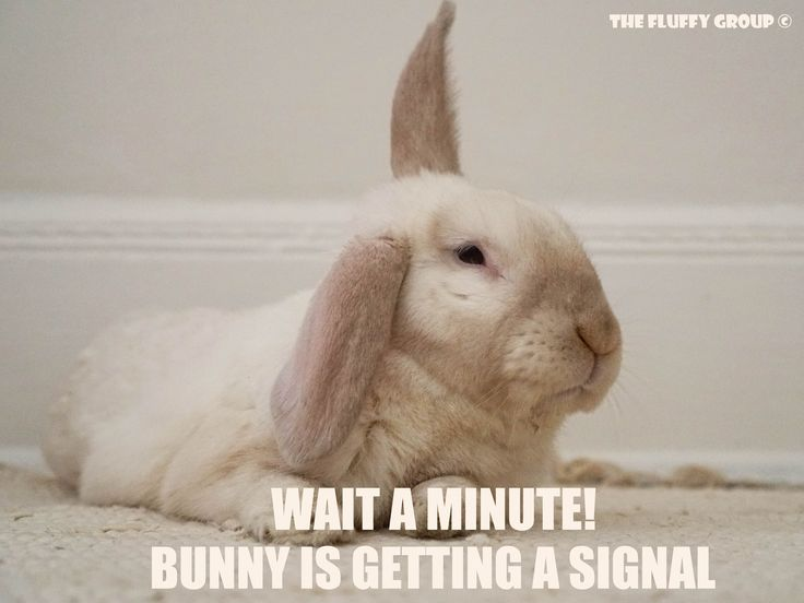 Follow The Fluffy Group on Instagram, Facebook and Pinterest. Memes, bunny care tips and tricks, and simple adorable photos of the bonded neutered cage-free duo. <3