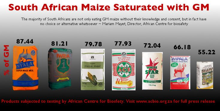 FOOD FASCISM IN SOUTH AFRICA: TIGER BRANDS, PIONEER AND PREMIER FORCE FEEDING THE NATION RISKY GM MAIZE