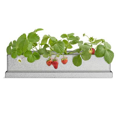 Look what I found at UncommonGoods: strawberry windowsill growbox... for $54 #uncommongoods