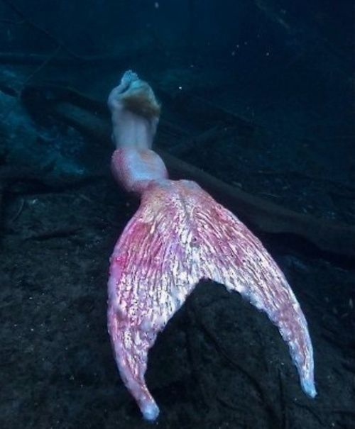"""""""I'm going to be a mermaid."""" """"What's the hardest part about being a mermaid?"""" """"Holding your breath."""""""