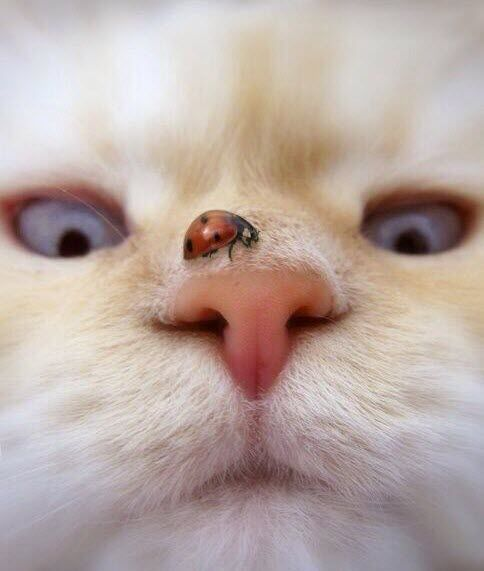 I love the way this cat is so intent on the ladybird – cross-eyed and everything!
