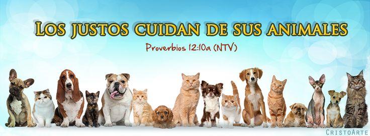"""""""Los justos cuidan de sus animales"""" - Proverbios 12:10a (Nueva Traducción Viviente)."""