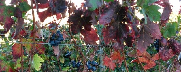 Glimpses of Autumn in the Hill…….in the surroundings of Francomondo