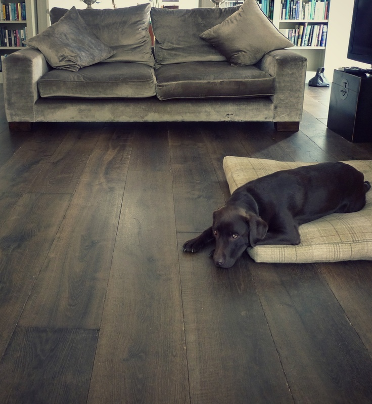 Gorgeous dog enjoying new oak flooring!  #Georgian house with Chauncey's Regency Aged grey engineered oak