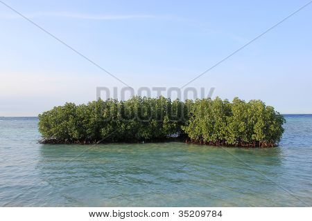Mangrove at Tidung Island, Indonesia