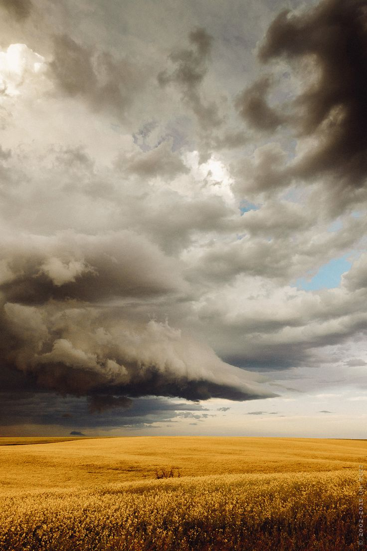 thephotographerssociety:  prairie storm over canola fields / alberta / i.m. ruzz