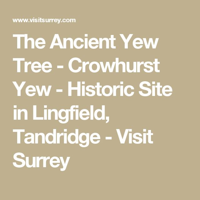 The Ancient Yew Tree - Crowhurst Yew - Historic Site in Lingfield, Tandridge - Visit Surrey