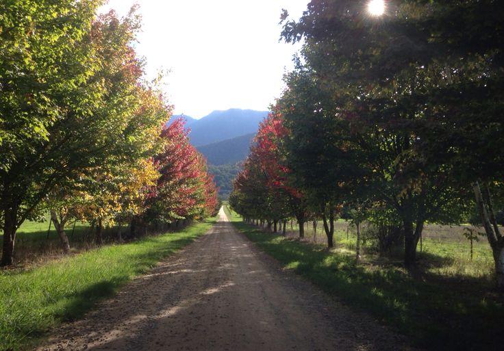 10yr anniversary- Bright vic- beautiful autumn