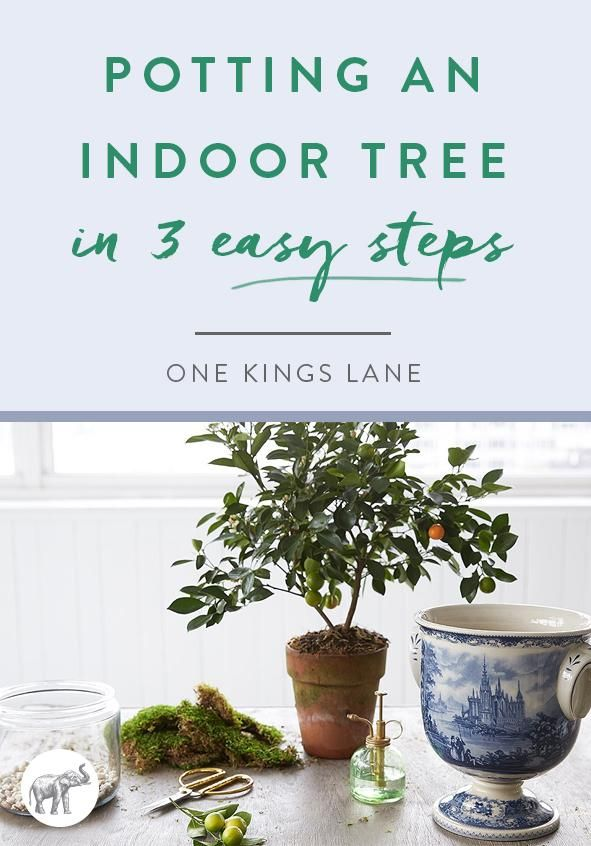 Ready to glam up your plant game? Keep reading for a simple breakdown of how to grow an indoor tree in your favorite pot or urn.