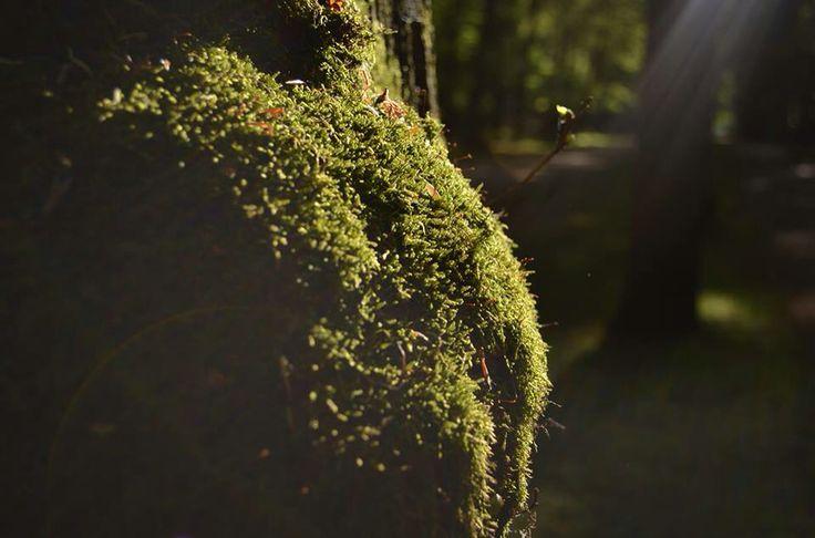 Sun and green macro photography