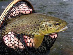 Go fishing - the website http://www.lakedistrictfishing.net/ has the best url ever ;-)