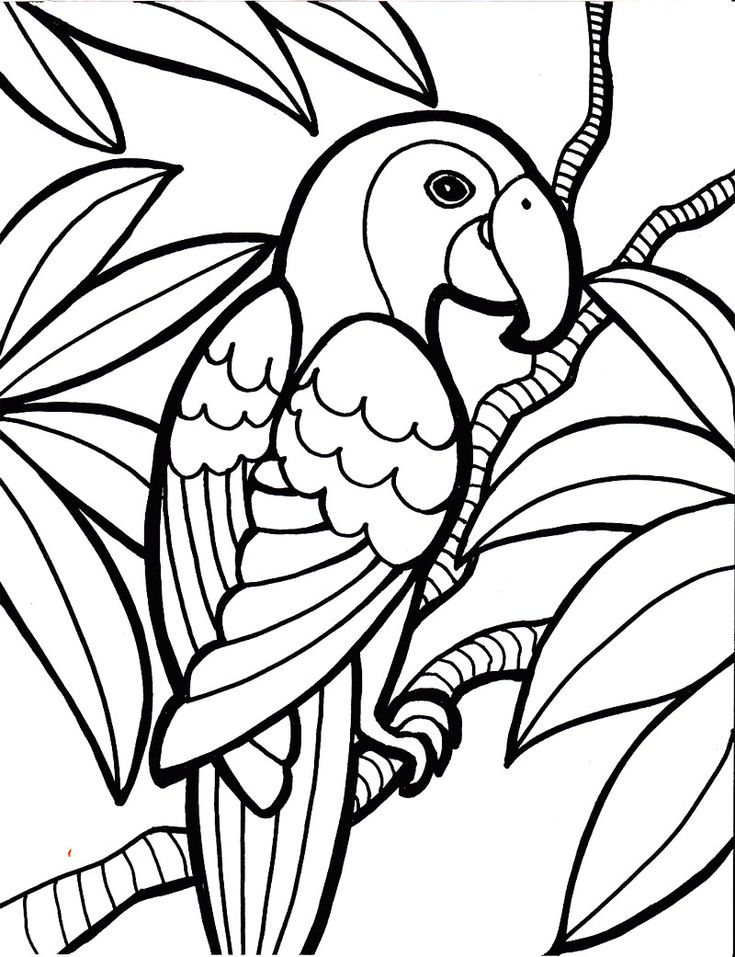 33 best Coloring book images on Pinterest Coloring books Adult