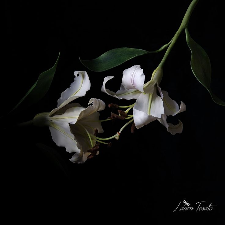 #whitelilies#coldporcelain#clayart#sugarart