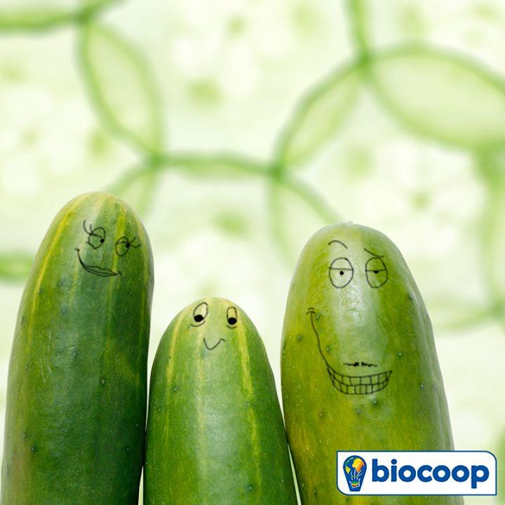 Un peu de frais en ce mois de juin : le concombre est notre légume du mois !