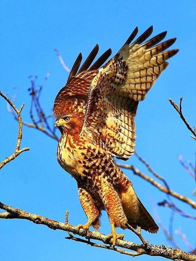 Bird Of Prey Birds Of Prey Amimales Pinterest