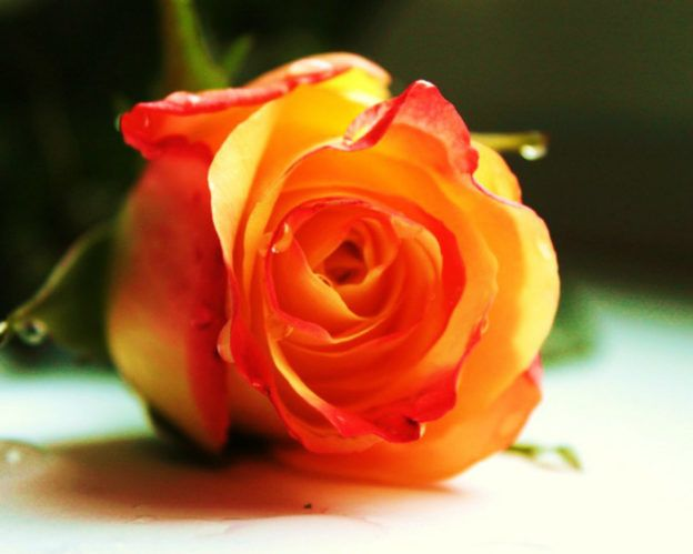 https://mosthdwallpapers.com/orange-rose-wallpapers-beautiful-orange-flowers-pictures/