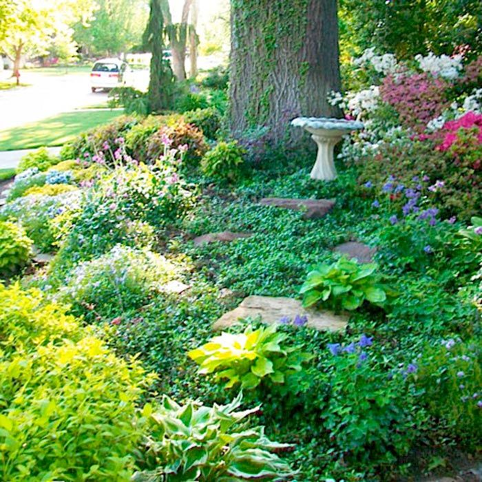 garden ideas near tall trees grass in the deep shade and competitive