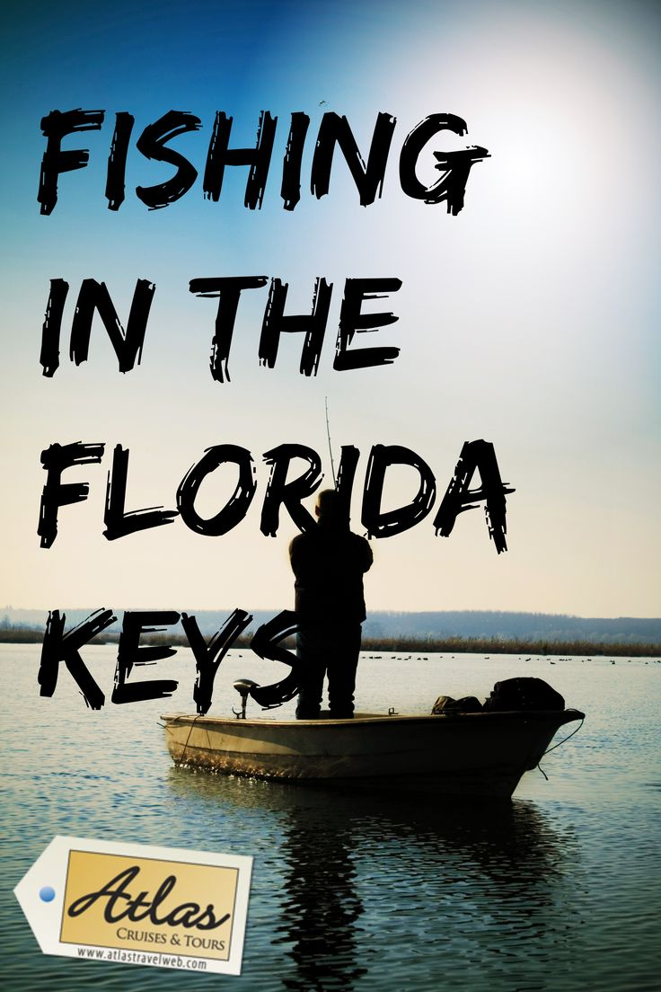 59 best fishing lobstering in the florida keys images on what you need to know about fishing in the florida keys nvjuhfo Image collections