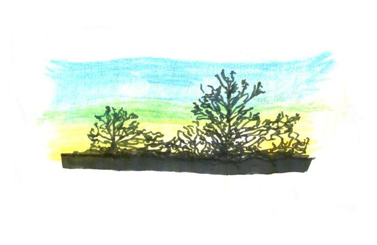Seashore vegetation in Kent. By Rani V.