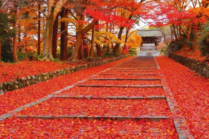 京都の紅葉絵巻もいよいよフィナーレ、晩秋に見ごろを迎える毘沙門堂・下鴨神社・興聖寺へ | ことりっぷ