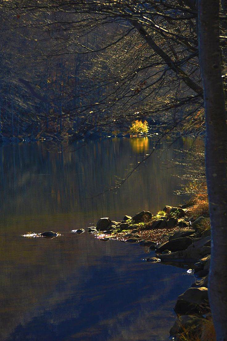 High Val Parma Forest  -  The Lagoni Sunrise on lake