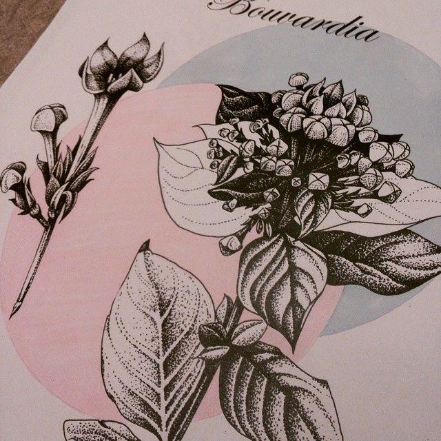 Prickteknik i skolan #blommor #bouvardia #illustration #västerås #eskilstuna