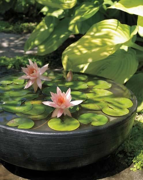 You don't have to have a lily pond to grow water plants. All you need is sun, a little outdoor space, & a container. Visit the site to discover sources for mail-order aquatic plants & containers / Martha Stewart Living, August 2012