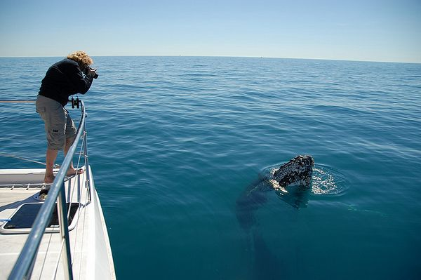 5 Reasons To Visit Cairns, Australia. Whale watching and wine tasting!