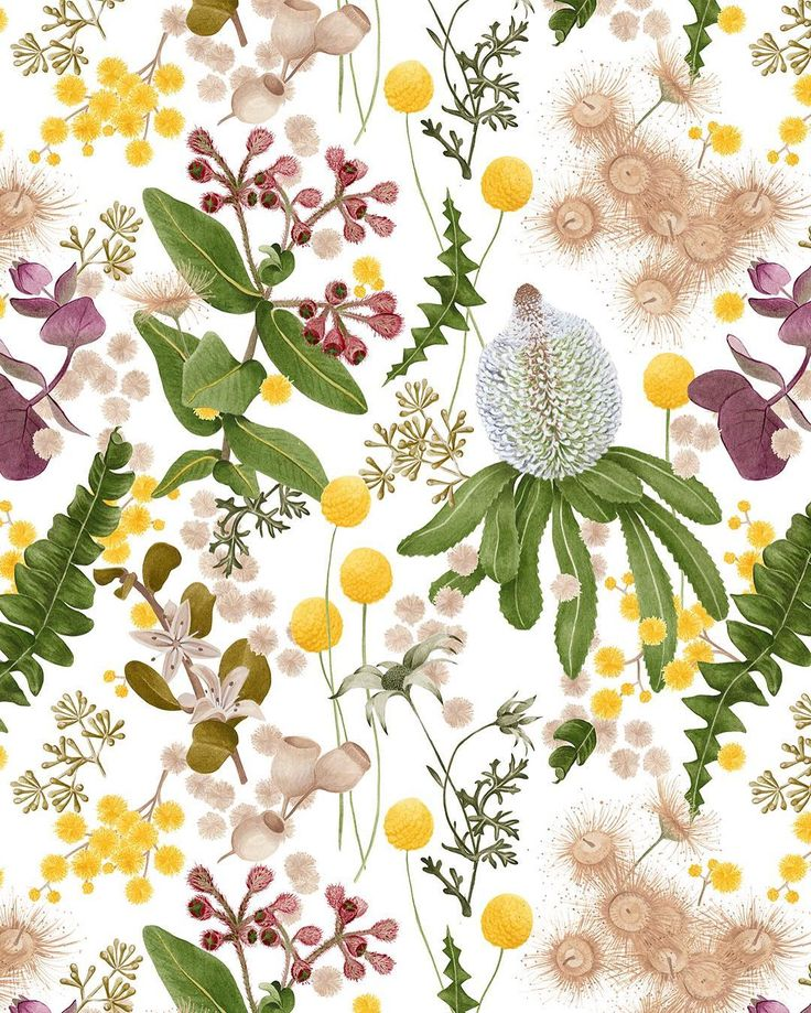 Botanical wallpaper for @haymespaint Colour Library  Vol 3 | COLLABORATE Australian natives painted in the beautiful Haymes colours  Available to order hi@louisejones.com.au