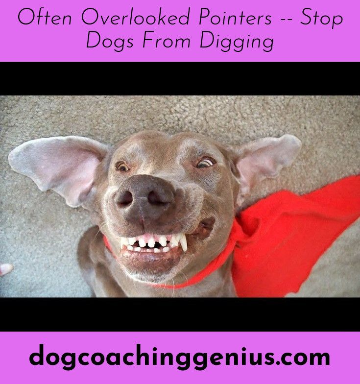Simply Click The Link For More Information Stop Dog From Pooping