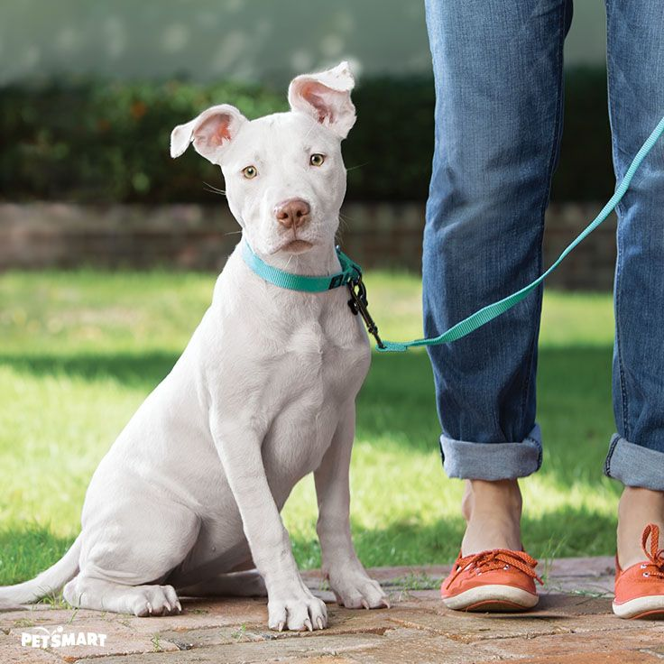 Start your relationship with your new puppy on the right paw with PetSmart puppy training.